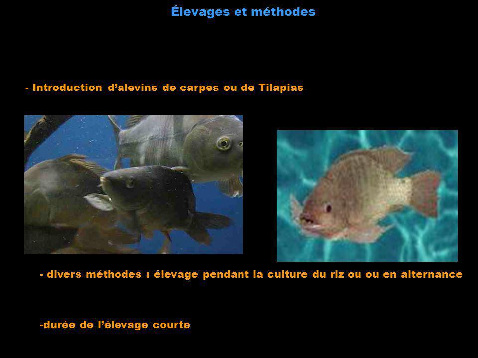 Élevages et méthodes - Introduction d'alevins de carpes ou de Tilapias