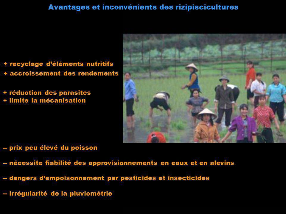 Avantages et inconvénients des rizipiscicultures
