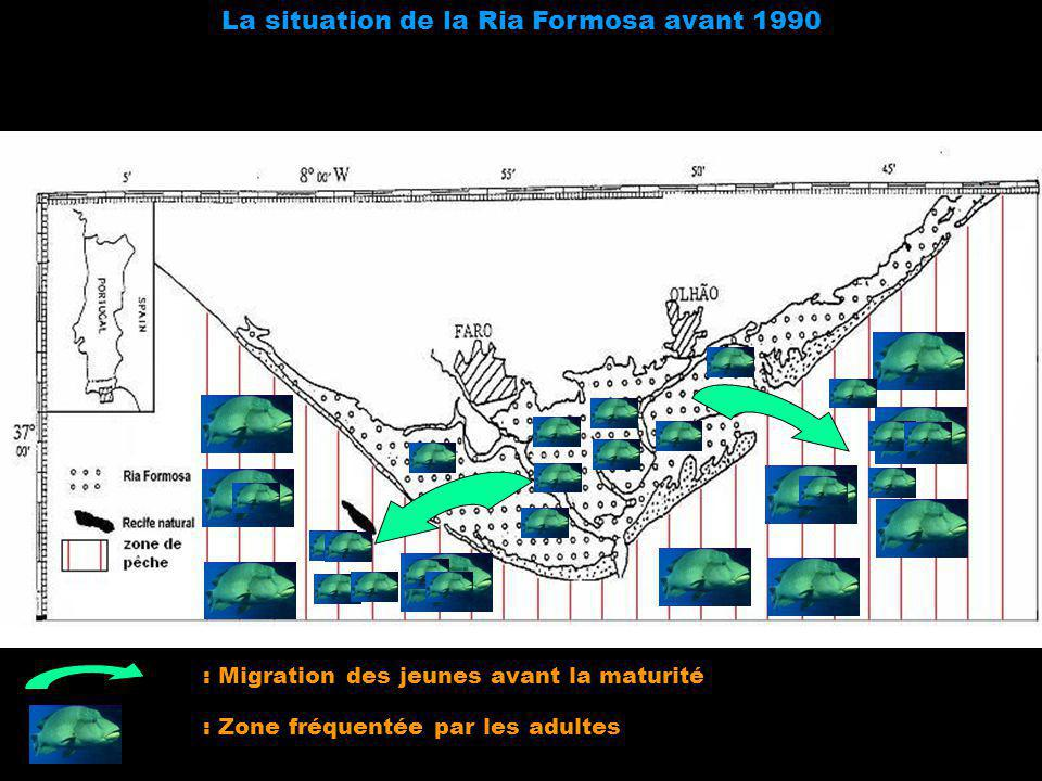 La situation de la Ria Formosa avant 1990