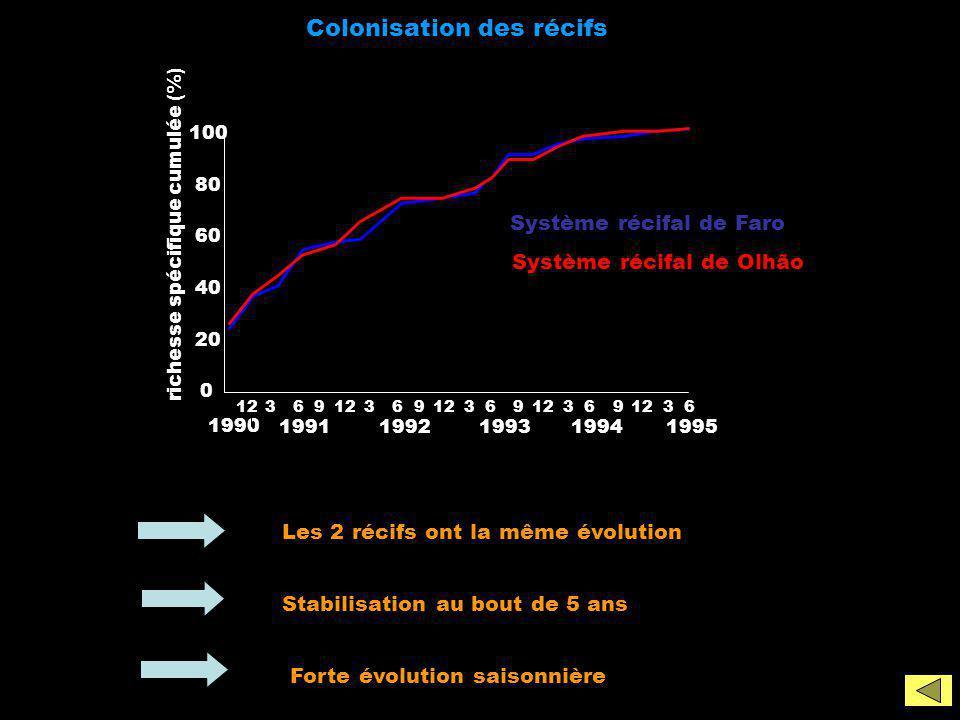 Colonisation des récifs