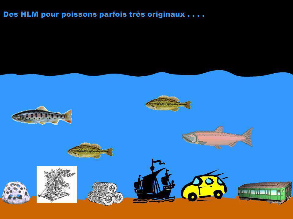 Des HLM pour poissons parfois très originaux . . . .