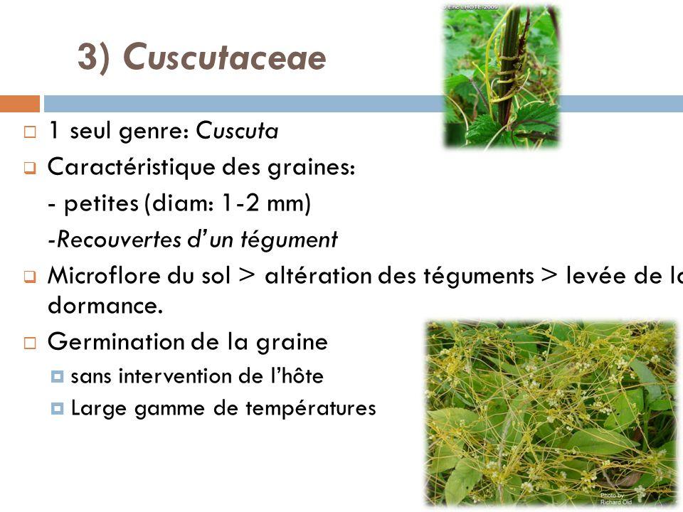 3) Cuscutaceae 1 seul genre: Cuscuta Caractéristique des graines: