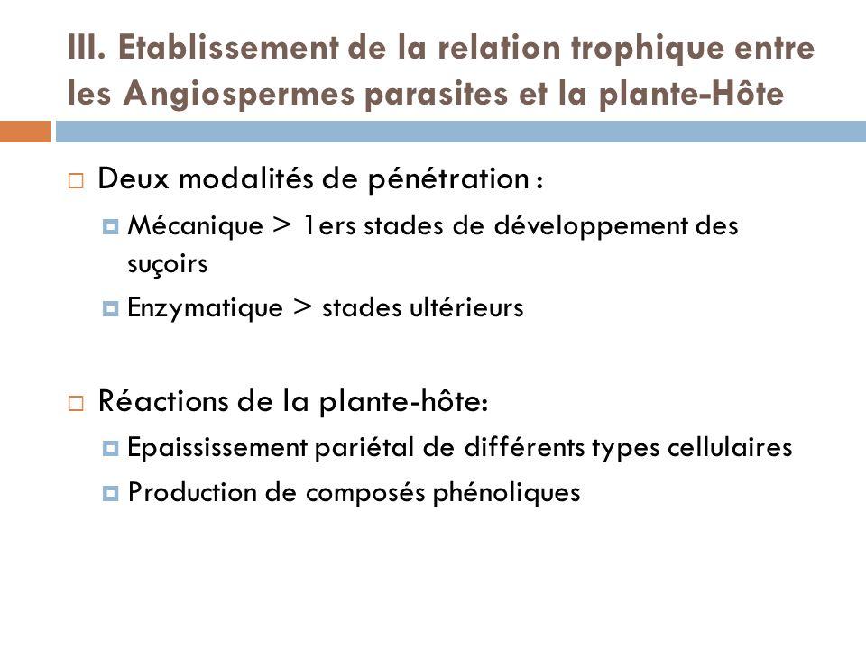 III. Etablissement de la relation trophique entre les Angiospermes parasites et la plante-Hôte