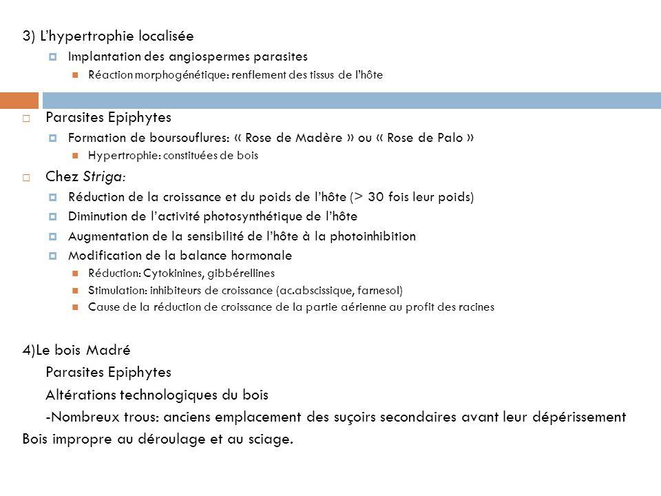 3) L'hypertrophie localisée