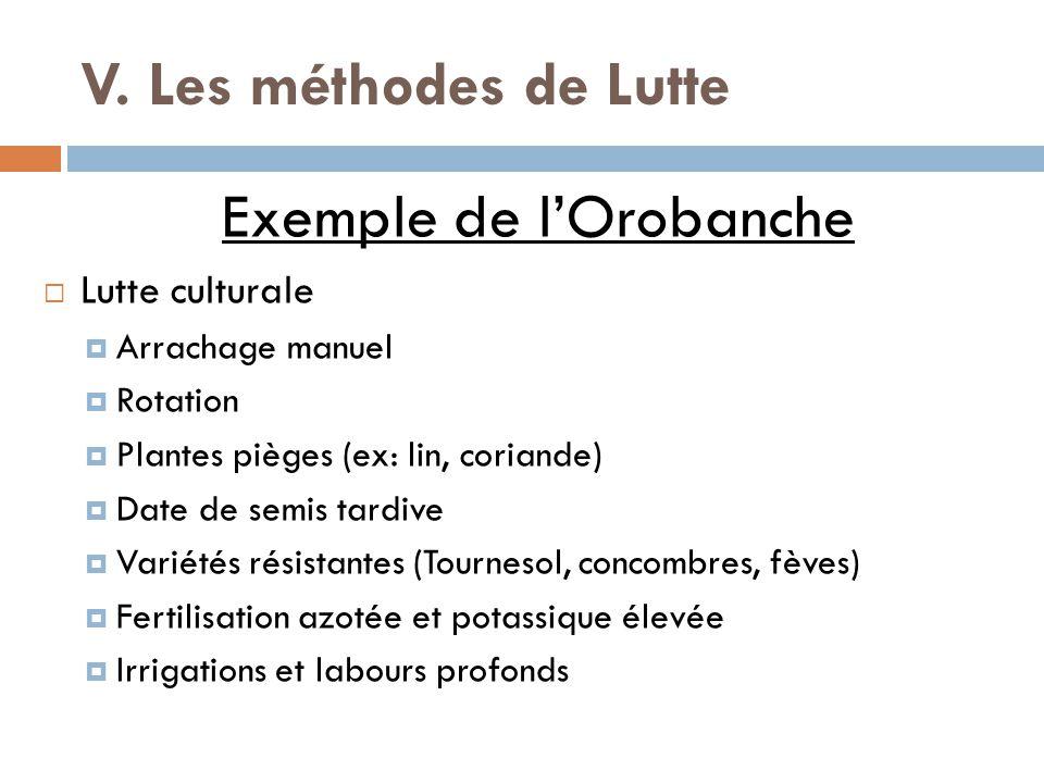Exemple de l'Orobanche