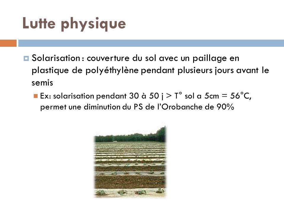 Lutte physique Solarisation : couverture du sol avec un paillage en plastique de polyéthylène pendant plusieurs jours avant le semis.