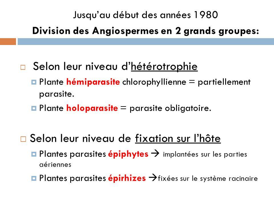 Division des Angiospermes en 2 grands groupes: