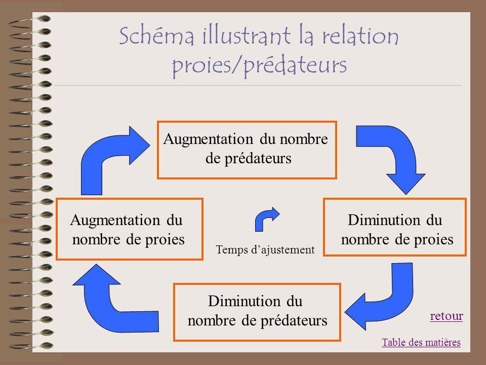 Schéma illustrant la relation proies/prédateurs