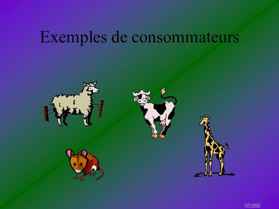 Exemples de consommateurs
