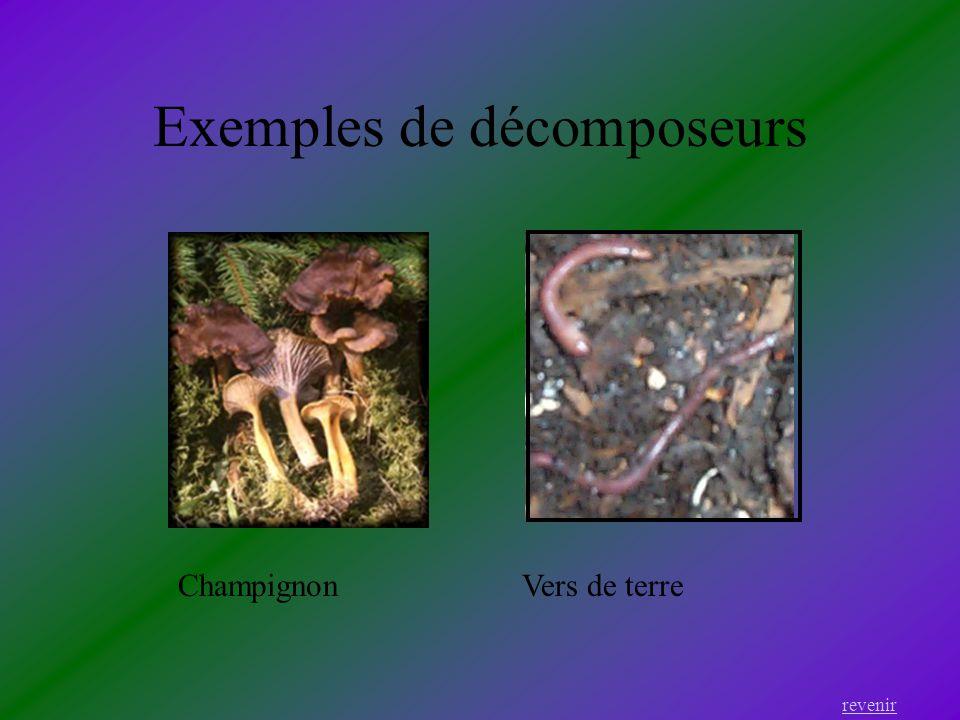 Exemples de décomposeurs
