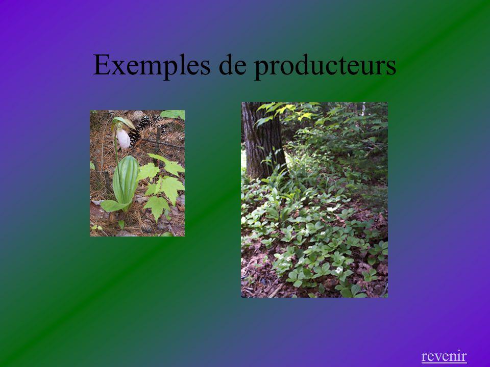 Exemples de producteurs