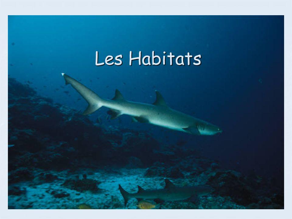 Les Habitats