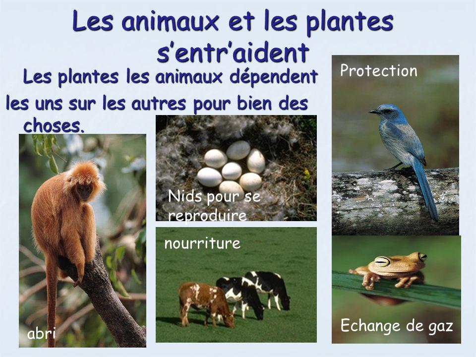 Les animaux et les plantes s'entr'aident