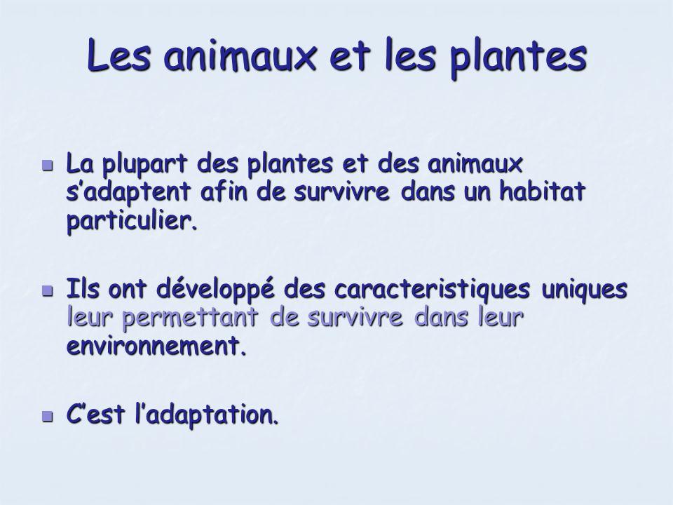 Les animaux et les plantes