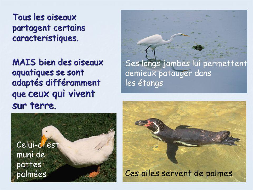 Tous les oiseaux partagent certains caracteristiques.