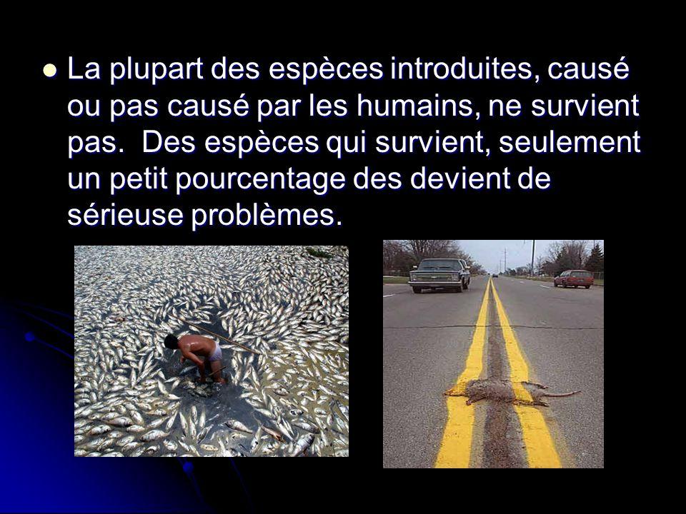 La plupart des espèces introduites, causé ou pas causé par les humains, ne survient pas.