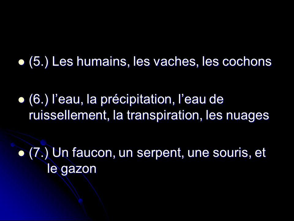 (5.) Les humains, les vaches, les cochons
