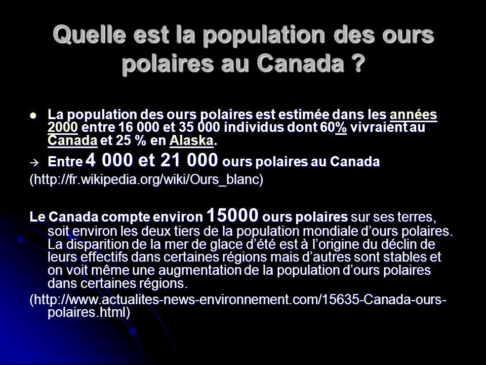 Quelle est la population des ours polaires au Canada