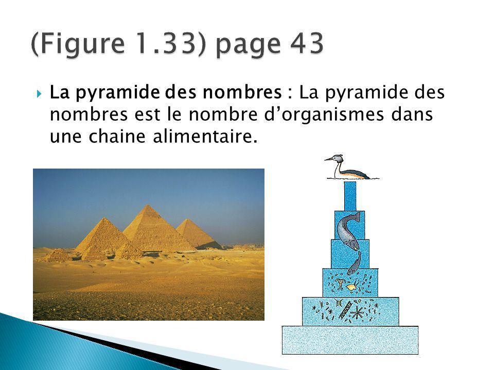 (Figure 1.33) page 43 La pyramide des nombres : La pyramide des nombres est le nombre d'organismes dans une chaine alimentaire.