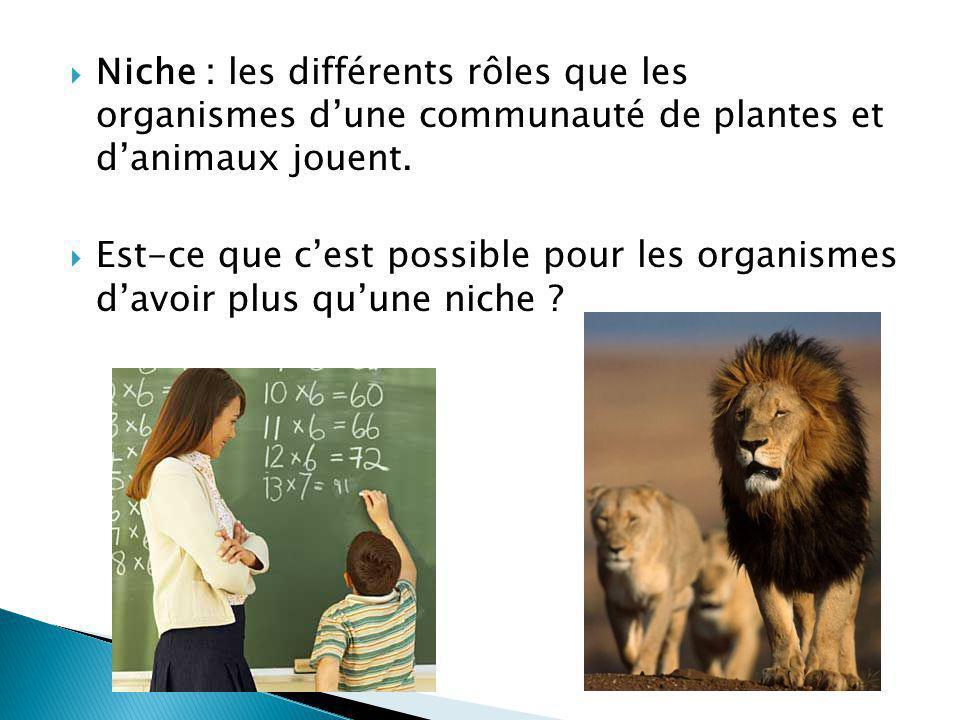 Niche : les différents rôles que les organismes d'une communauté de plantes et d'animaux jouent.