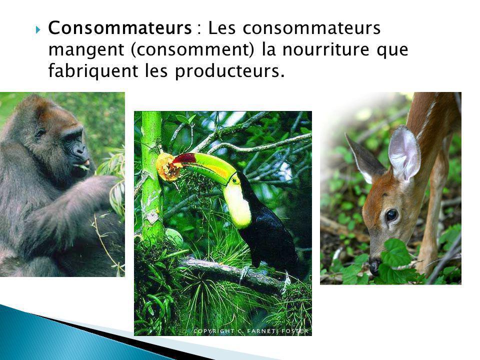 Consommateurs : Les consommateurs mangent (consomment) la nourriture que fabriquent les producteurs.