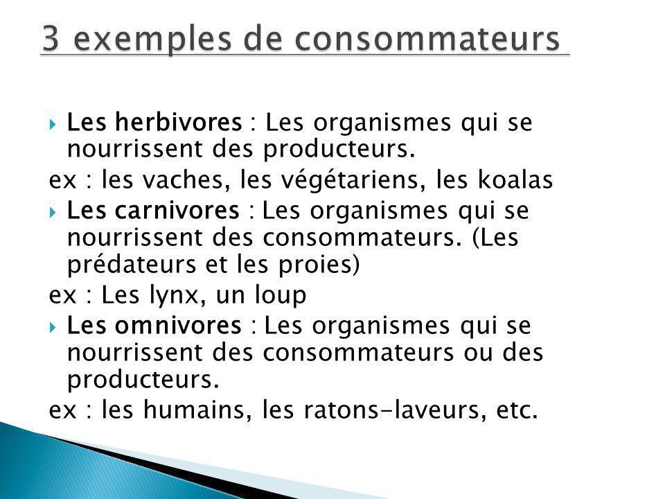 3 exemples de consommateurs