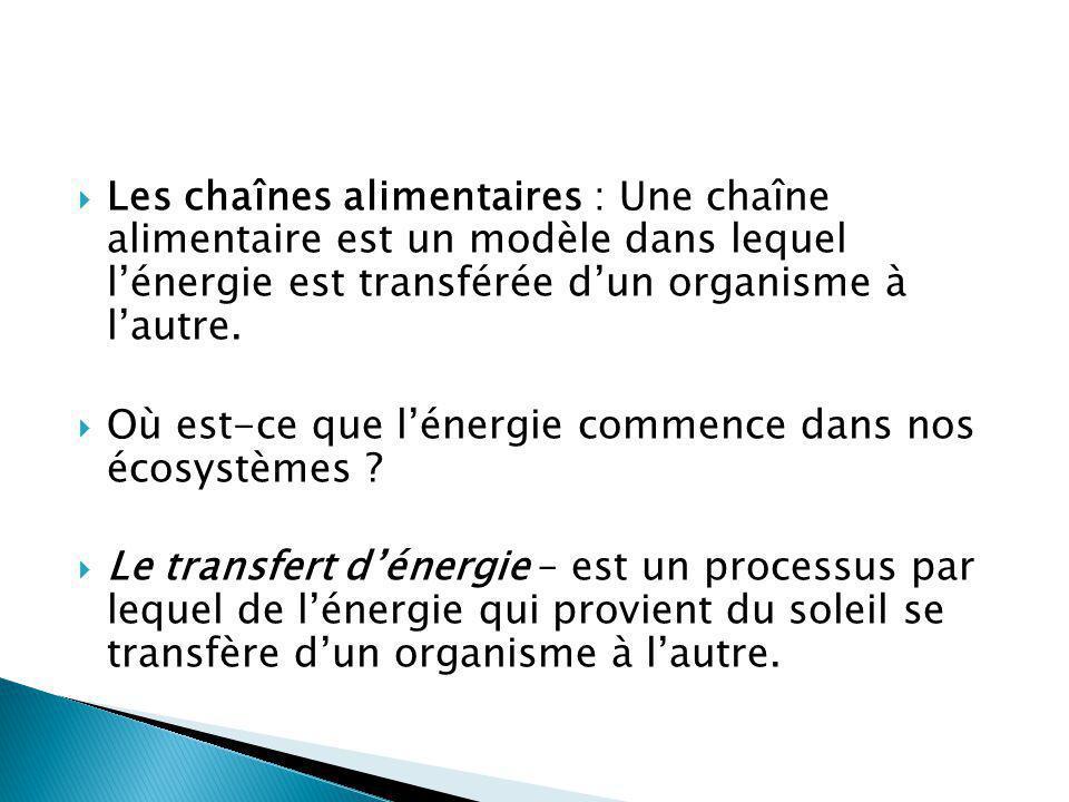 Les chaînes alimentaires : Une chaîne alimentaire est un modèle dans lequel l'énergie est transférée d'un organisme à l'autre.