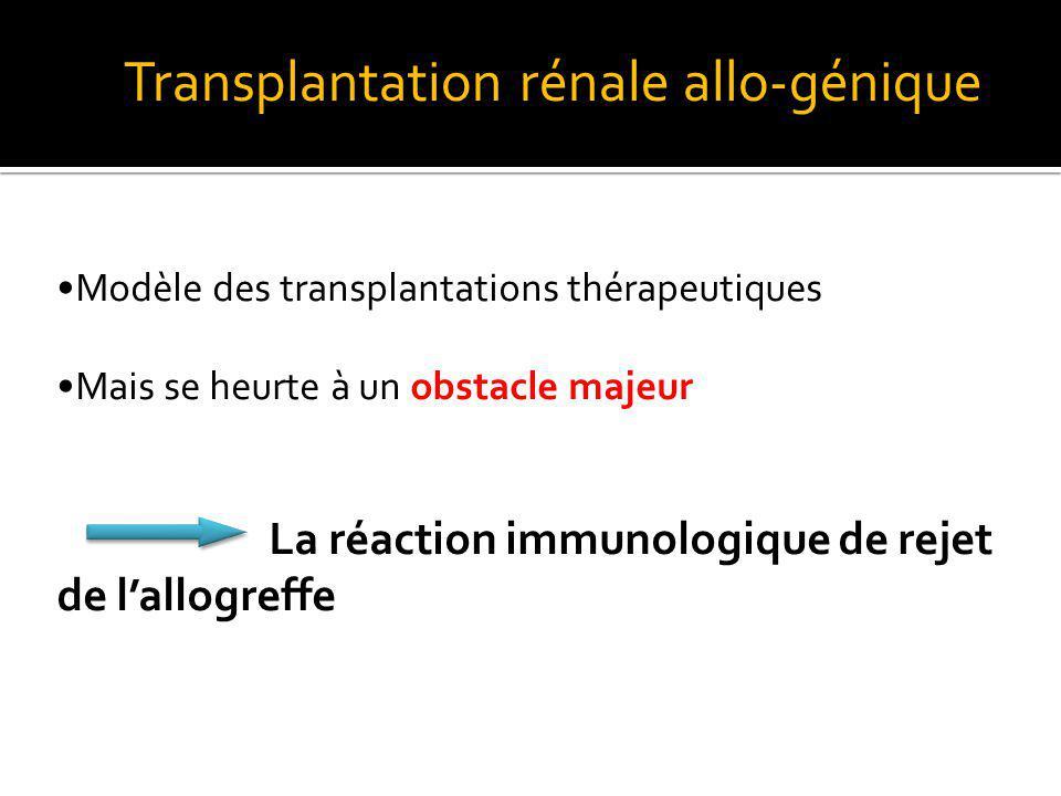 Transplantation rénale allo-génique