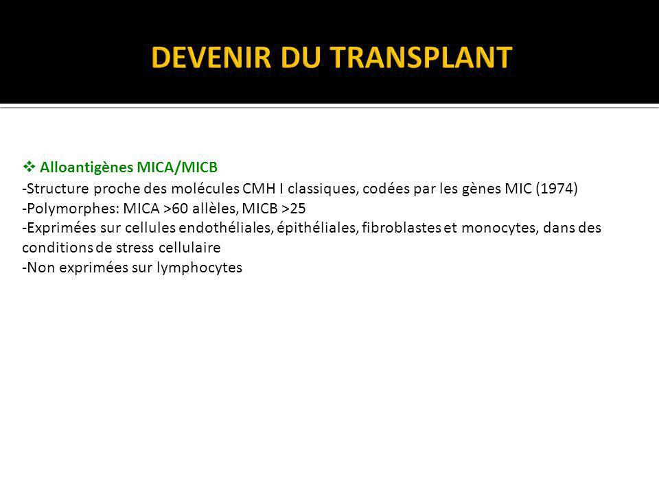 DEVENIR DU TRANSPLANT Alloantigènes MICA/MICB