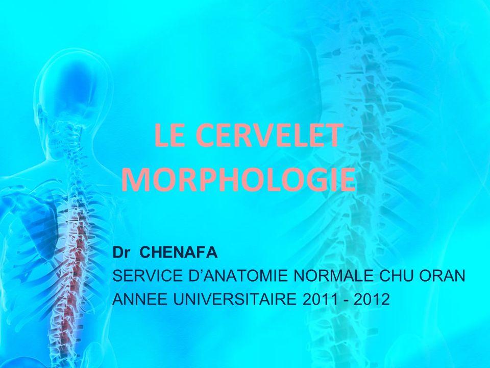 LE CERVELET MORPHOLOGIE
