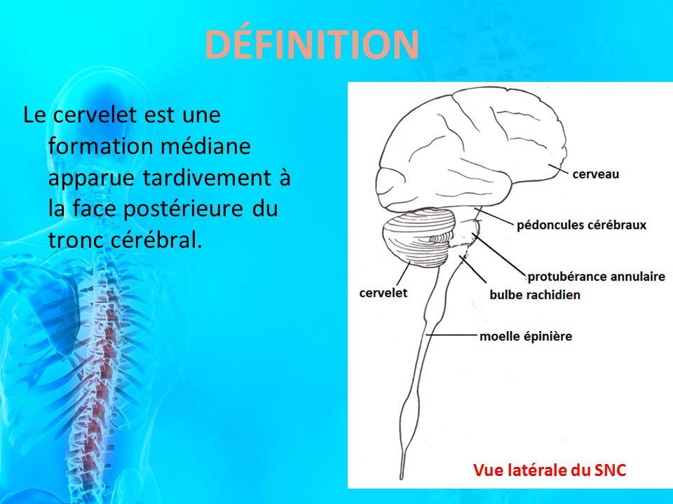 DÉFINITION Le cervelet est une formation médiane apparue tardivement à la face postérieure du tronc cérébral.