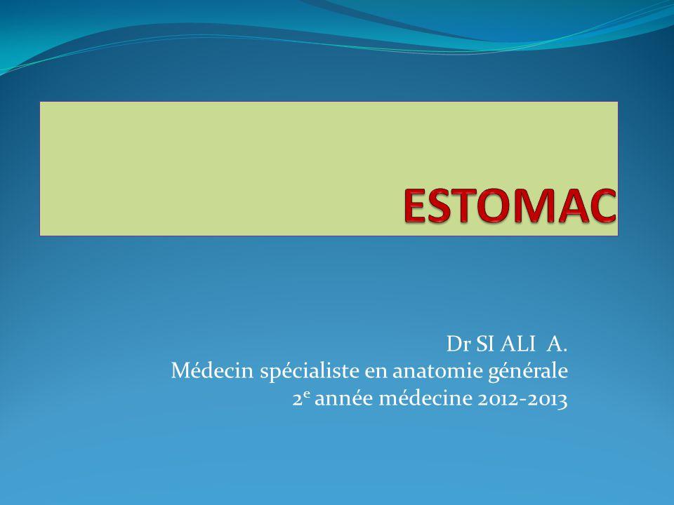 ESTOMAC Dr SI ALI A. Médecin spécialiste en anatomie générale