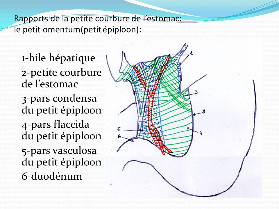 2-petite courbure de l'estomac 3-pars condensa du petit épiploon