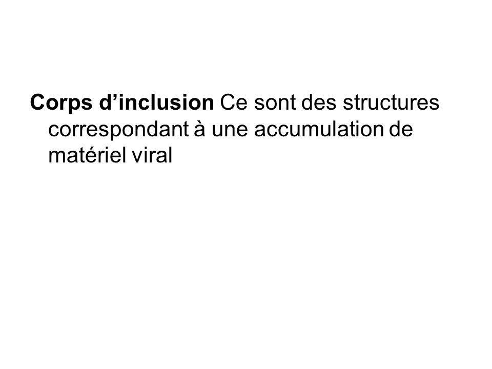 Corps d'inclusion Ce sont des structures correspondant à une accumulation de matériel viral