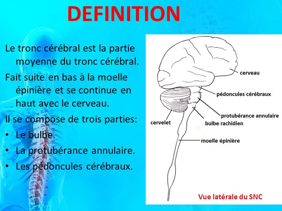 DEFINITION Le tronc cérébral est la partie moyenne du tronc cérébral.