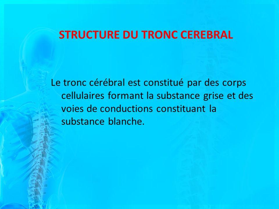 STRUCTURE DU TRONC CEREBRAL