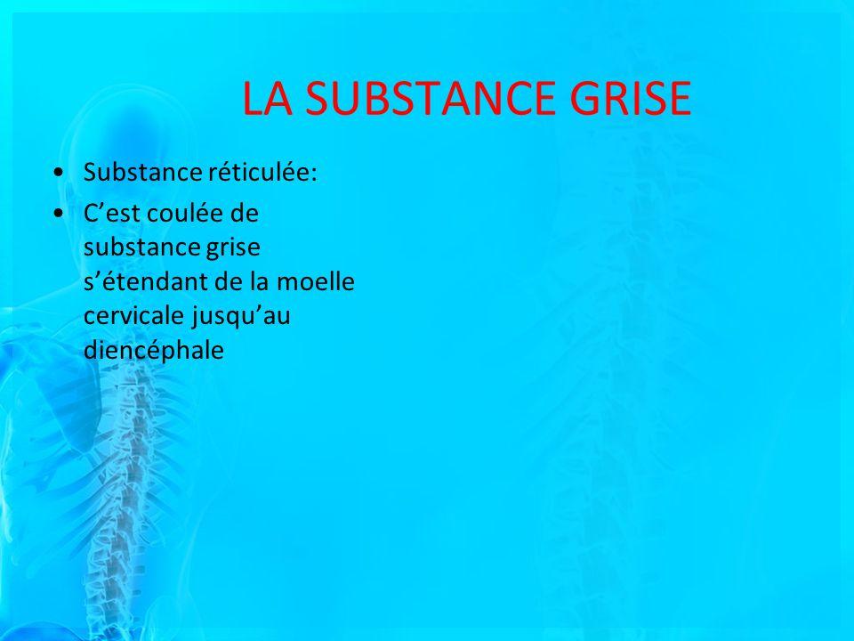 LA SUBSTANCE GRISE Substance réticulée: