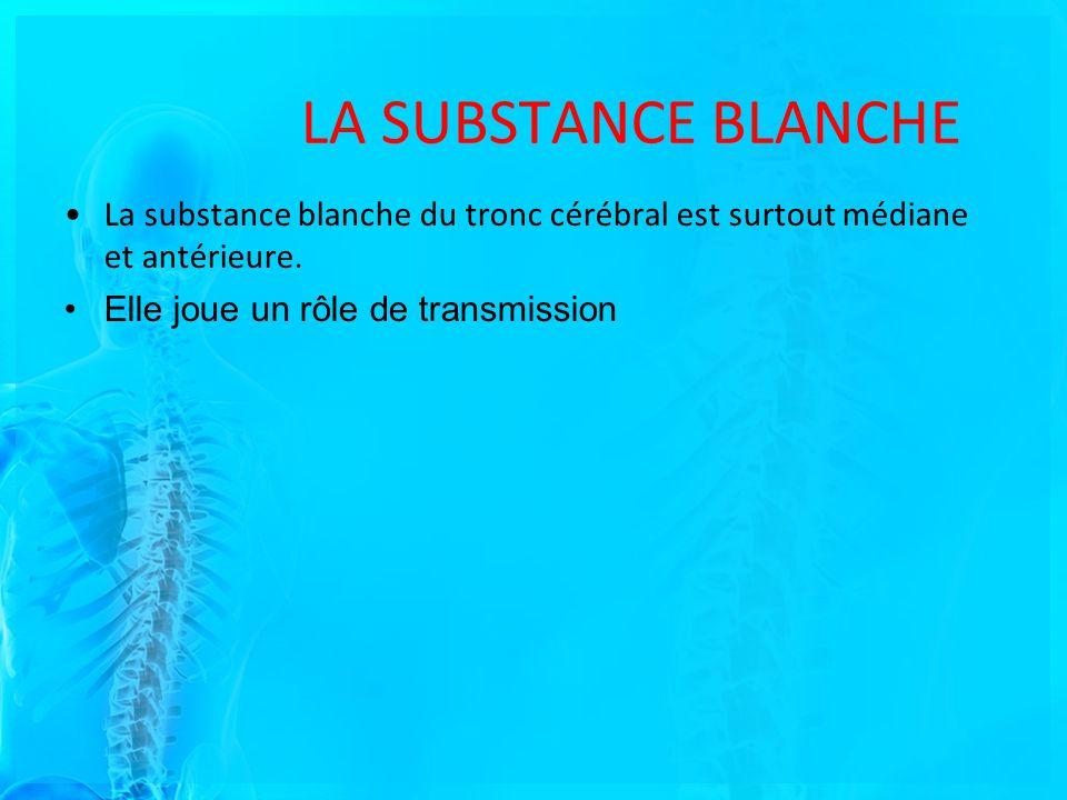 LA SUBSTANCE BLANCHE La substance blanche du tronc cérébral est surtout médiane et antérieure.
