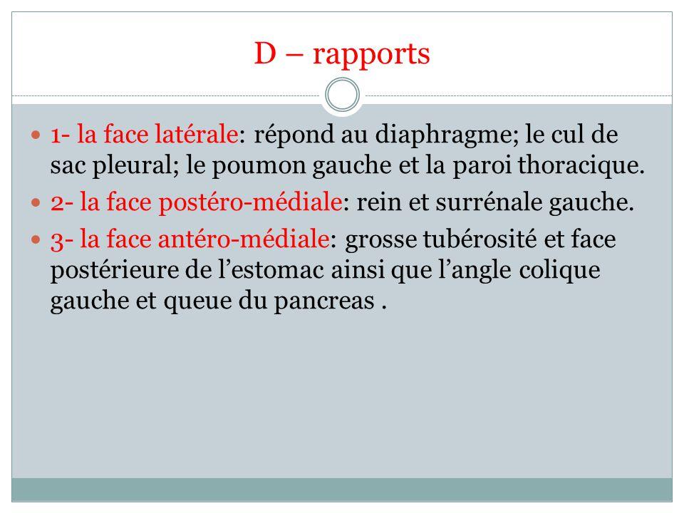 D – rapports 1- la face latérale: répond au diaphragme; le cul de sac pleural; le poumon gauche et la paroi thoracique.