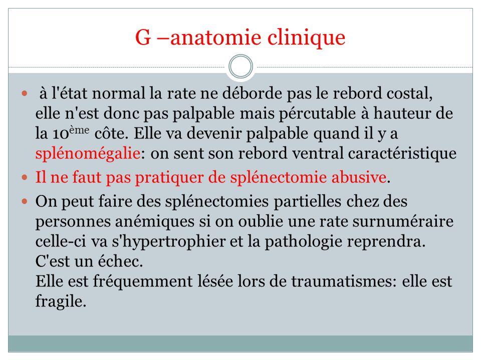 G –anatomie clinique