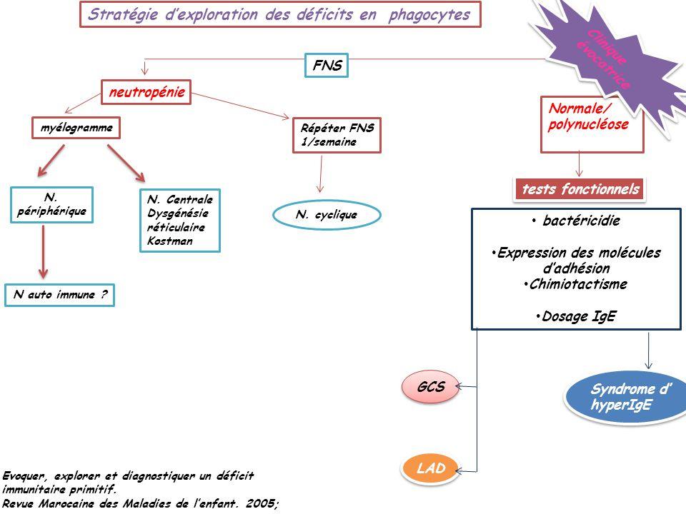 Expression des molécules