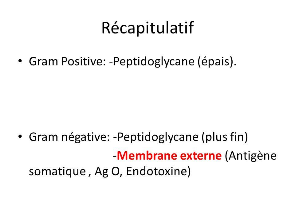 Récapitulatif Gram Positive: -Peptidoglycane (épais).