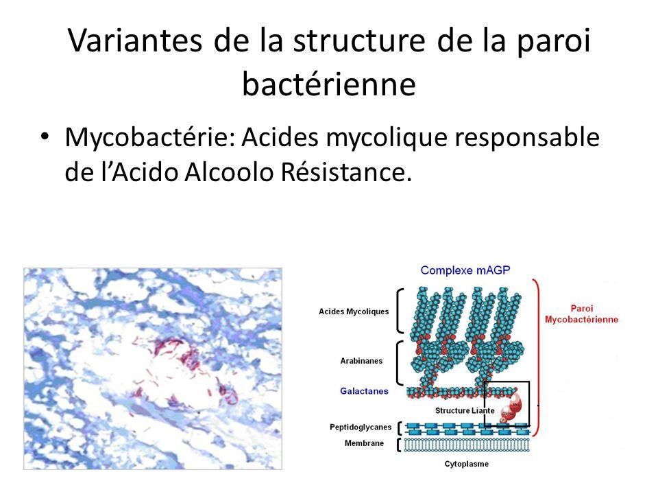 Variantes de la structure de la paroi bactérienne