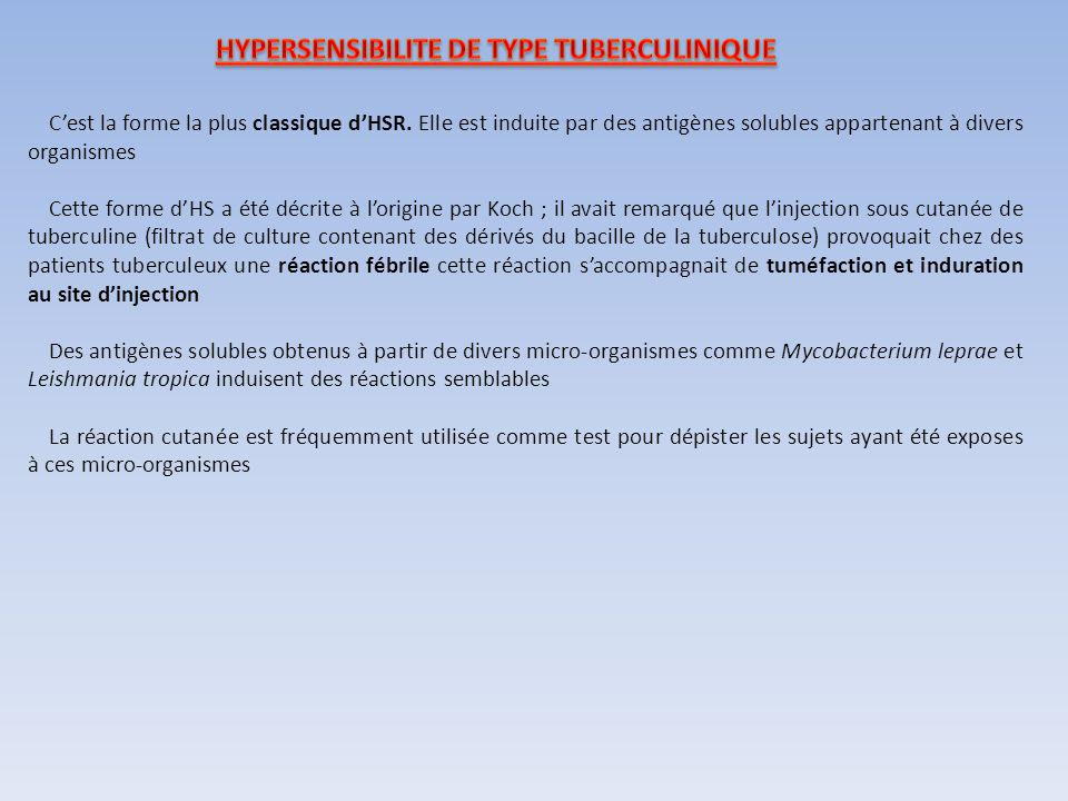 HYPERSENSIBILITE DE TYPE TUBERCULINIQUE