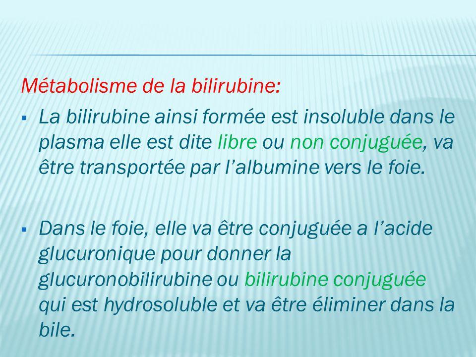 Métabolisme de la bilirubine: