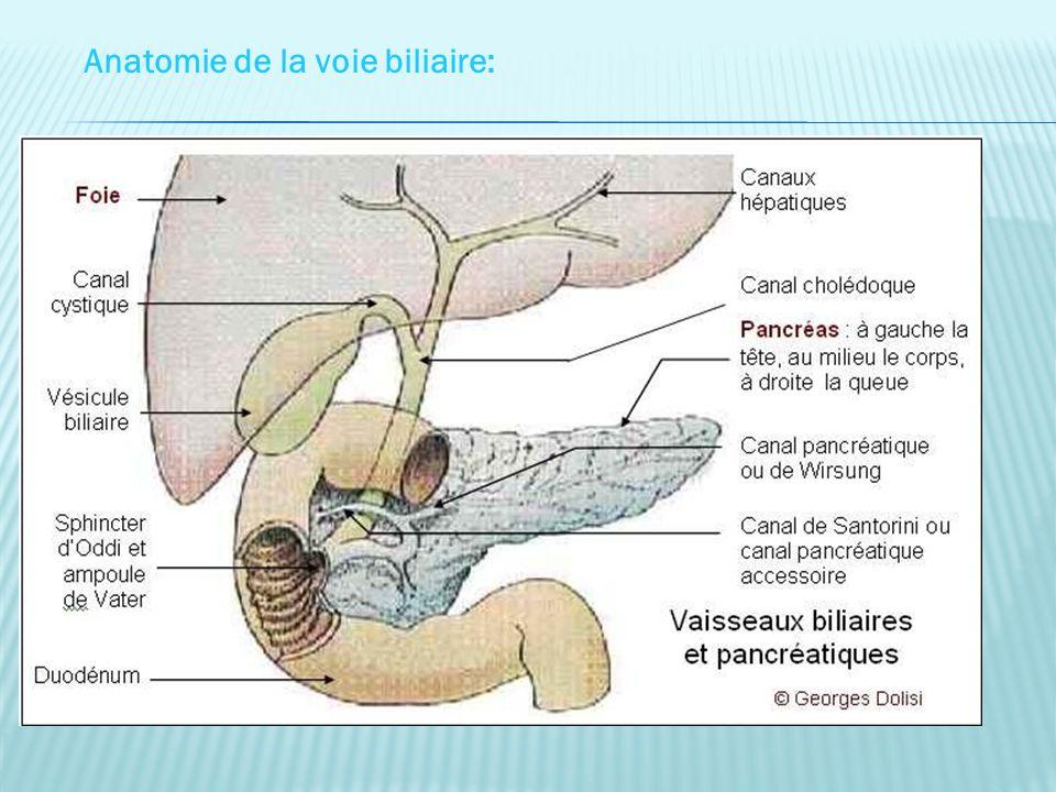 Anatomie de la voie biliaire: