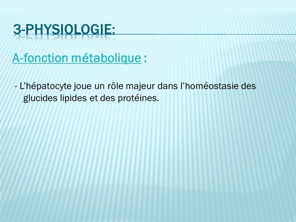 3-physiologie: A-fonction métabolique :