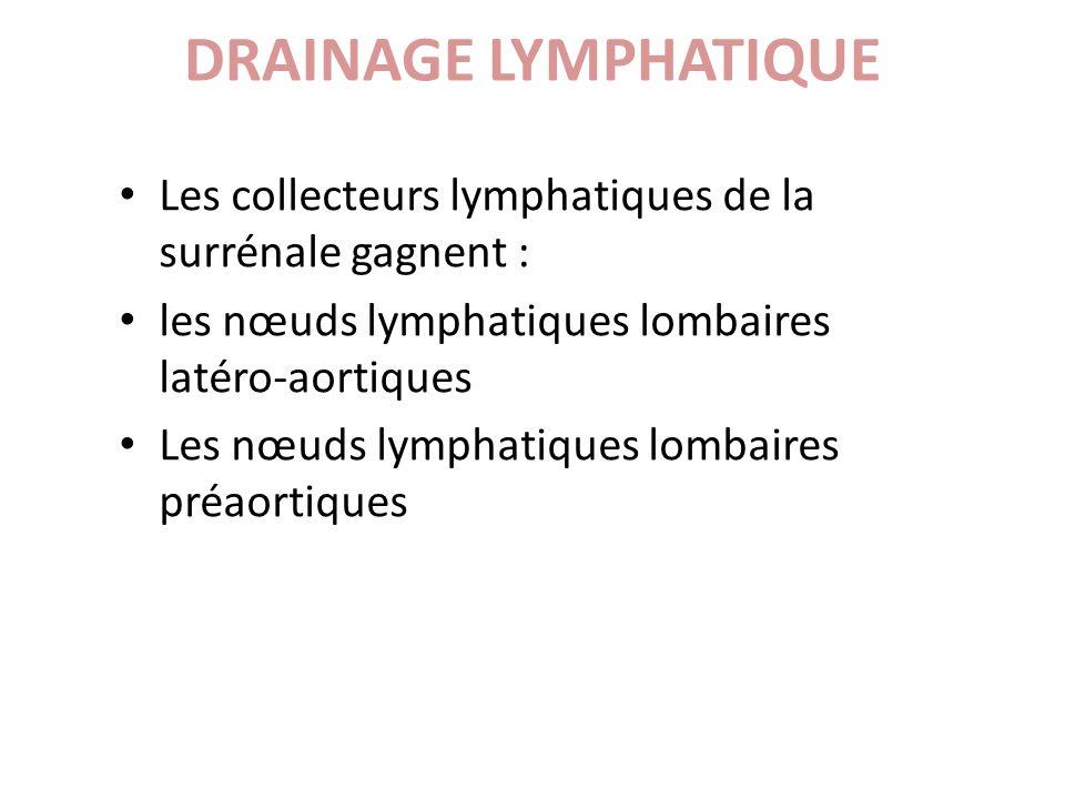 DRAINAGE LYMPHATIQUE Les collecteurs lymphatiques de la surrénale gagnent : les nœuds lymphatiques lombaires latéro-aortiques.