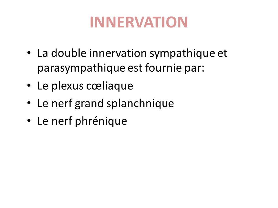INNERVATION La double innervation sympathique et parasympathique est fournie par: Le plexus cœliaque.