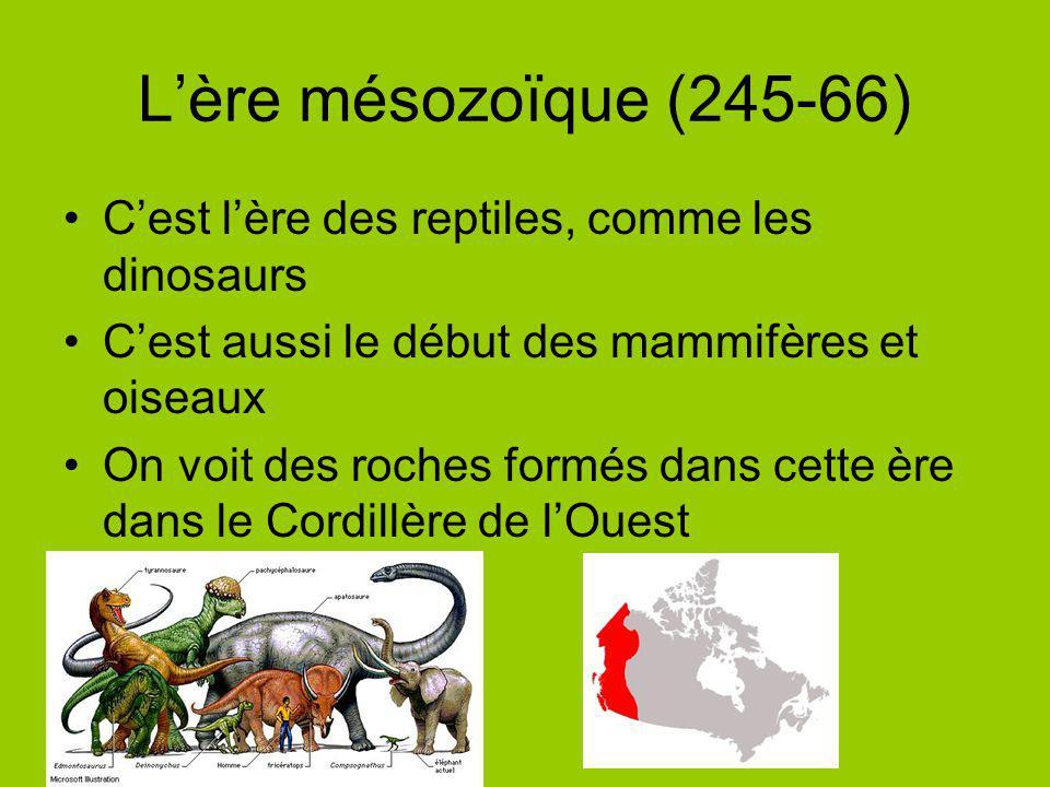 L'ère mésozoïque (245-66) C'est l'ère des reptiles, comme les dinosaurs. C'est aussi le début des mammifères et oiseaux.